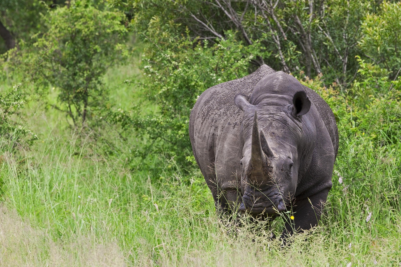 Suedafrika Gruppenreise - Breitmaulnashorn - Hluhluwe-Imfolozi Game Reserve - Suedafrika