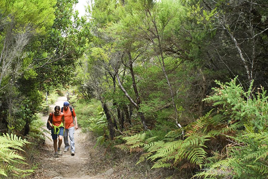 Wanderweg Garajonay-Nationalpark La Gomera
