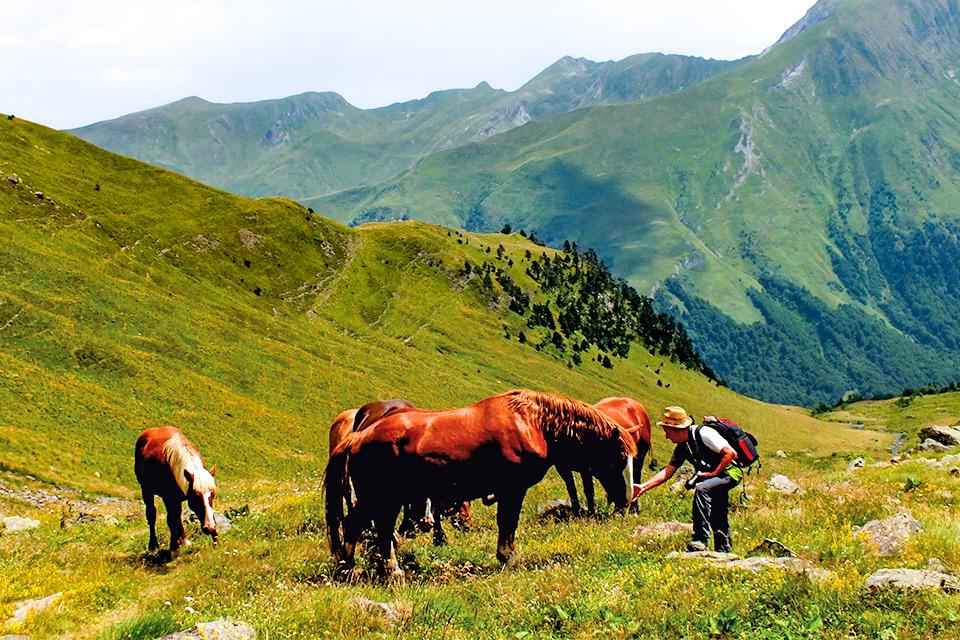 Wanderer streichelt grasende Pferde