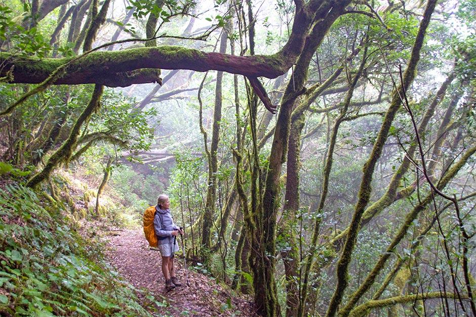 Geradezu mystisch: Der Nebelwald im Garajonay-Nationalpark