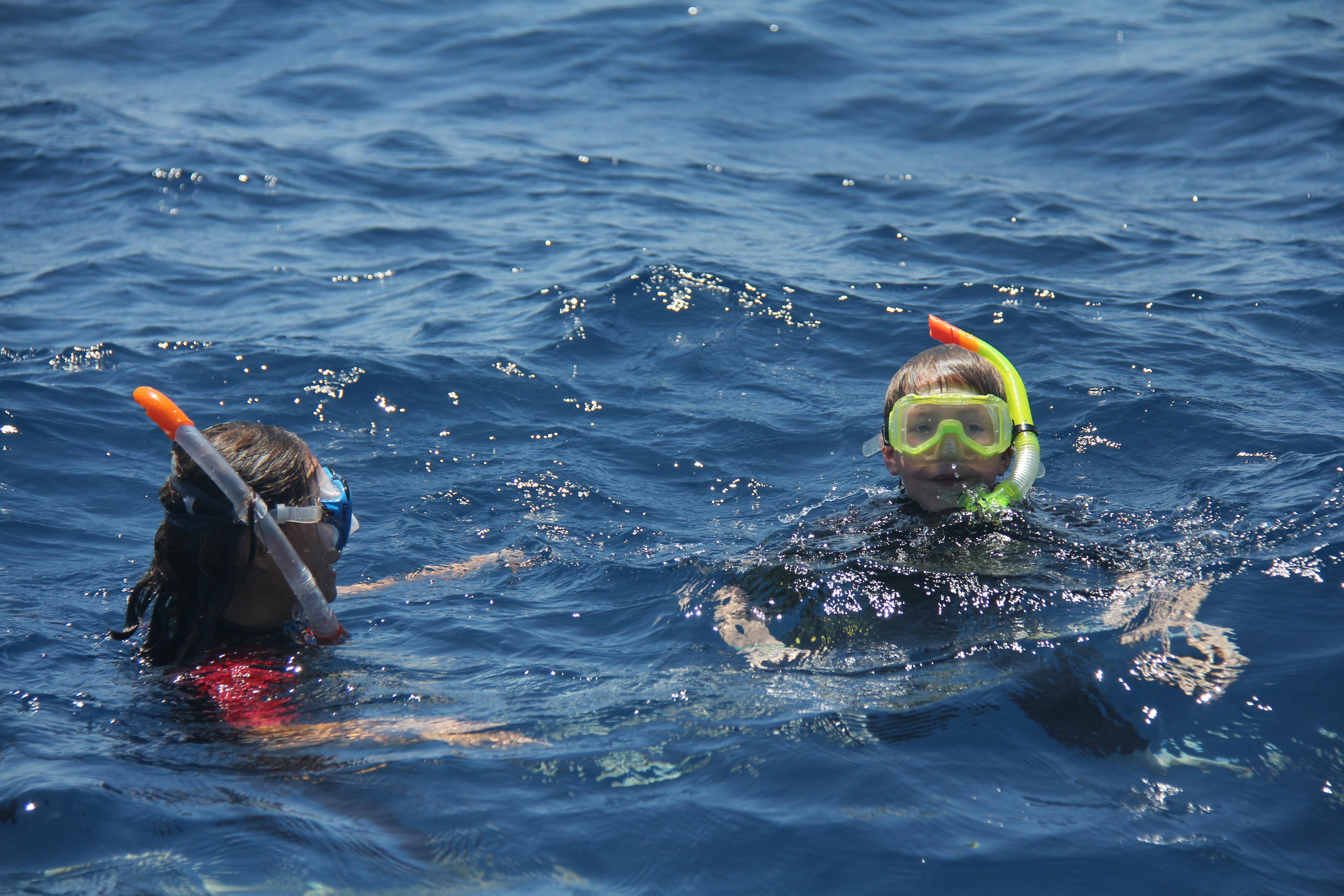 Azoren_Schwimmen mit Delfinen 2_Sao Miguel