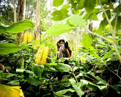 Quinta da Terca_Tropical