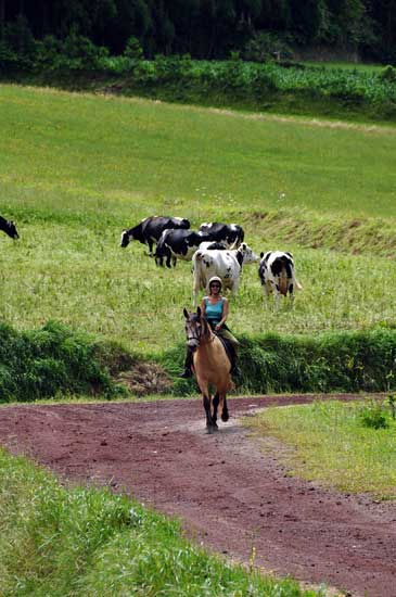 Quinta da Terca_Pferd mit Kuh