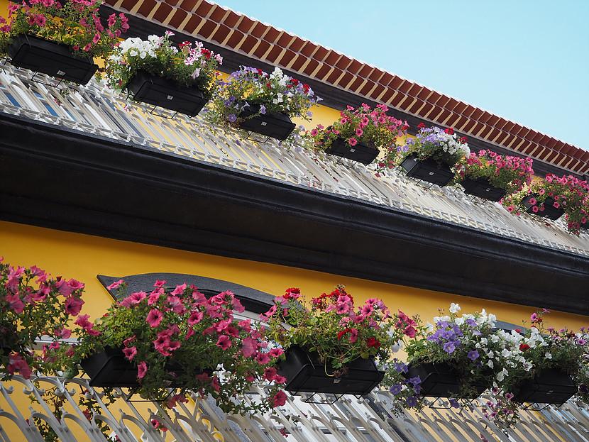 Globo Happy Hostel_Fassade mit Blumen