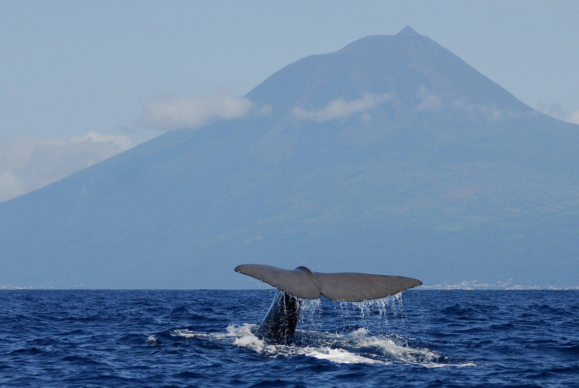 Whale Watching mit Mount Pico